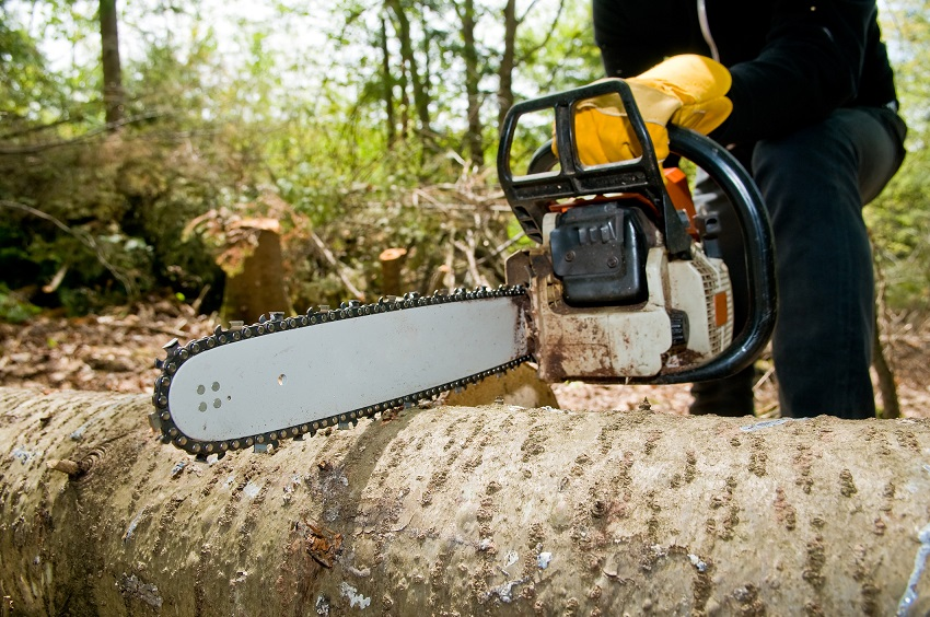 Tree-Felling-Services
